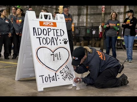 Over 500 Cats and Dogs Find Homes at North Carolina Adoption Event