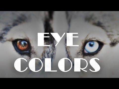 Eye Colors   Siberian Husky