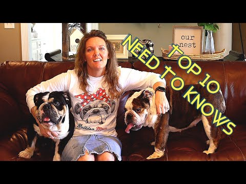 Top 10 Things To Know Before Buying an English Bulldog