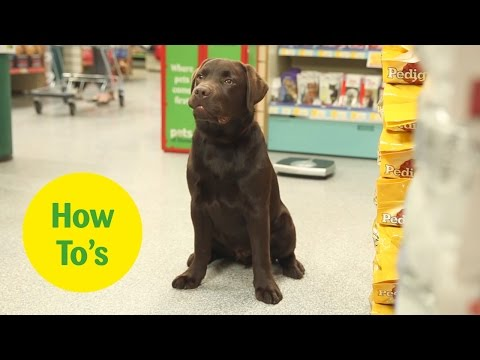 How to weigh your dog