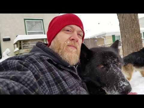 Blue Bay Shepherd vs German Shepherd