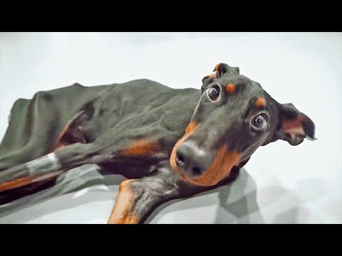 A tribute to Nancy, the Dobermann that made the world cry