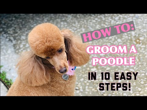 HOW TO GROOM A POODLE IN A LAMB CLIP IN 10 SIMPLE STEPS 🐶😍✂️