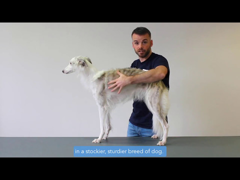 How to check your dog's Body Condition Score