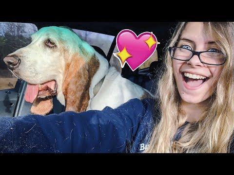 WE SAVED HIM! Basset Hound Rescue Mission! (BHRG)