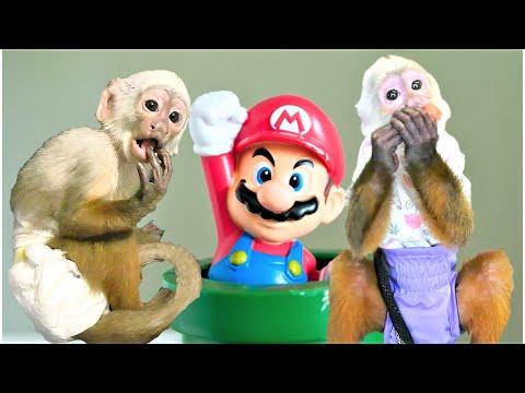 Monkeys DO Play with Toys! | Capuchin Monkey | Baby Monkey | Cinnamon Monkey