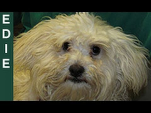 Edie - rescued an hour before euthanasia - Please share her story on Facebook/Twitter/Blog/MySpace.