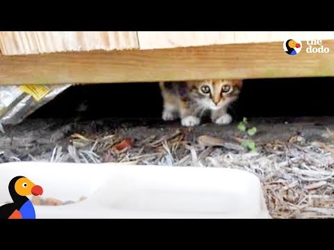 Kitten Abandoned at Playground Rescued by Sweetest Guy   The Dodo