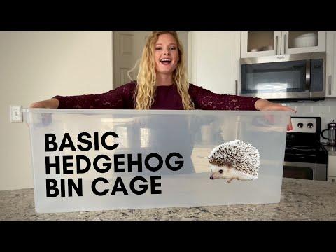Setting Up A Basic / Budget Friendly Hedgehog Cage