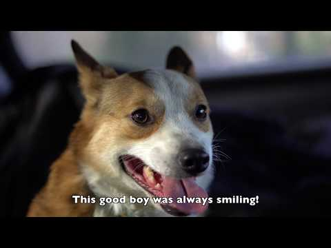 24 Hours to Rescue a Corgi from a Puppy Mill (Eggnog's Rescue Story)