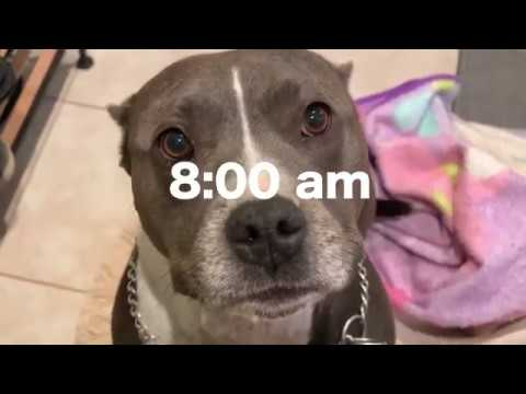 My Dog's Morning Routine!