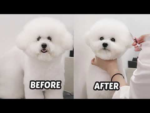 My Dog Goes to a Korean Pet Hair Salon! [BIG TRANSFORMATION]