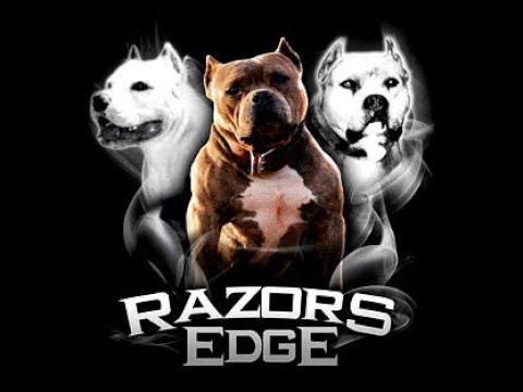 THE HISTORY OF THE RAZORS EDGE PIT BULL - AMERICAN BULLY BLOODLINE