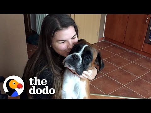 Skinny Shelter Dog Has The Happiest Transformation | The Dodo Foster Diaries