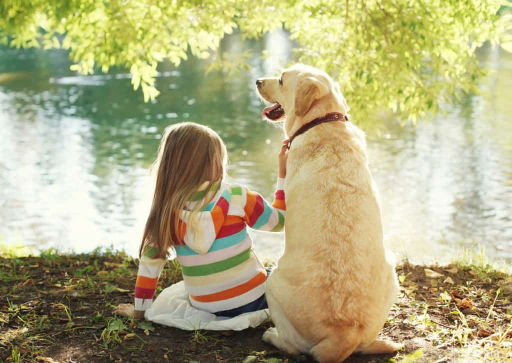 Will a Labrador Retriever Protects Its Owner