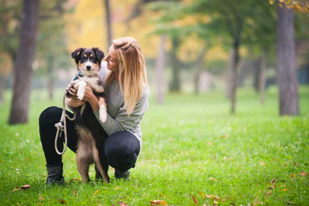 Are Australian Shepherds Good for First Time Owners?
