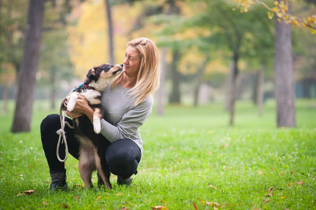 Will an Australian Shepherd Protect Its Owner?