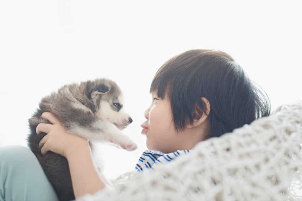 Are Siberian Huskies Good with Kids and Babies? A Guide for Parents