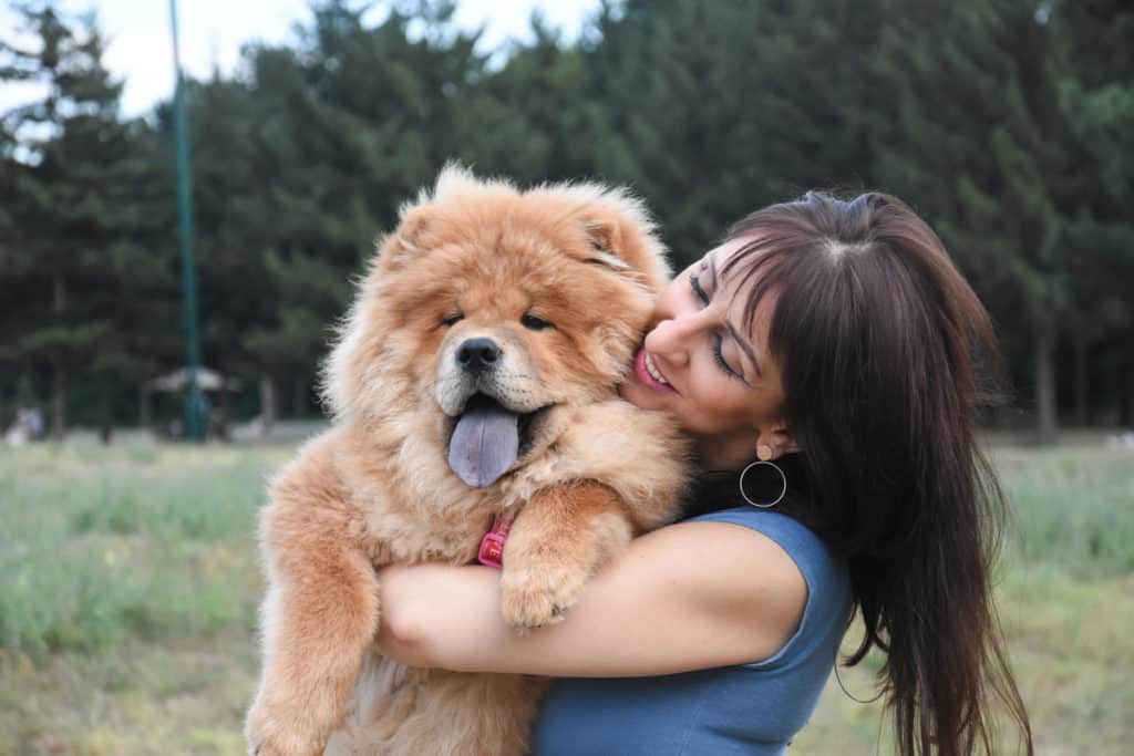 How Much Does a Chow Chow Cost? Puppy Prices and Expenses