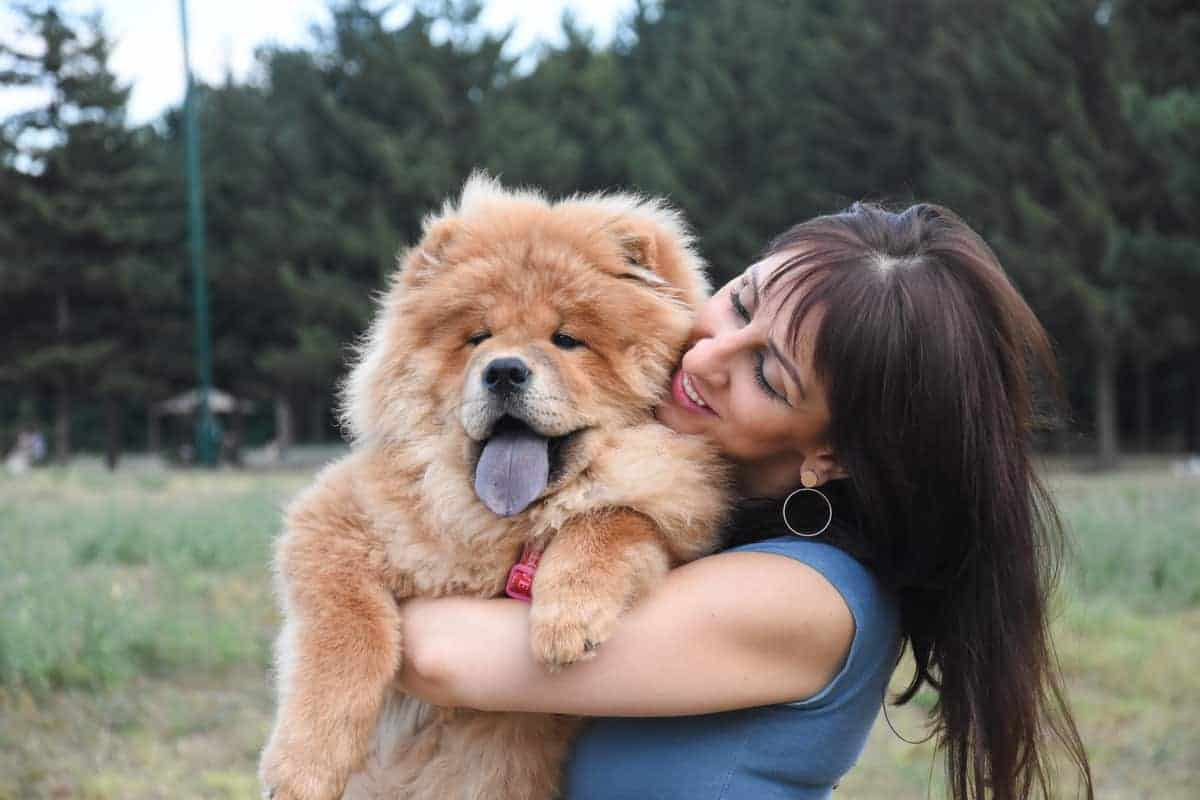 How Much Does A Chow Cost Puppy