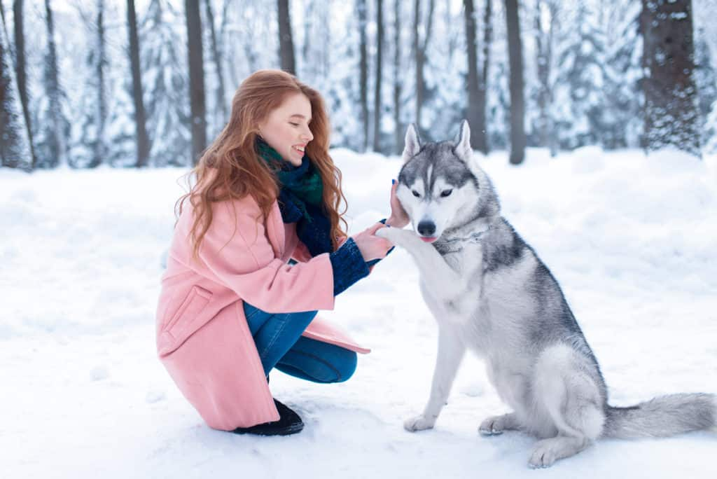 How to Get Siberian Huskies to Calm Down? 10 Simple Ways