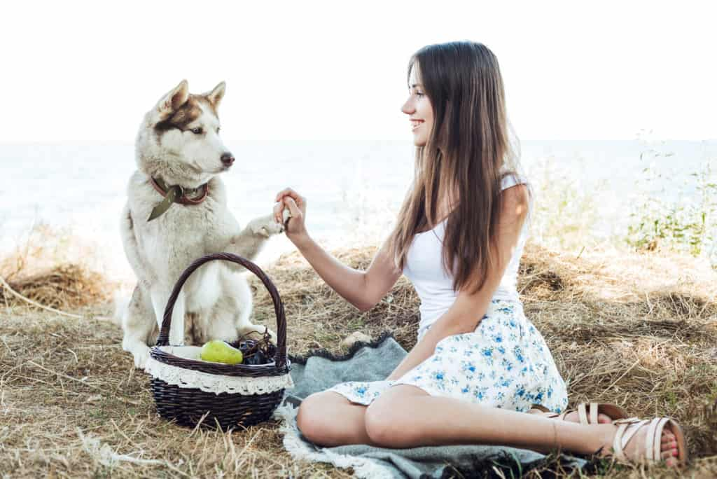 Are Siberian Huskies Good for First-time Owners?