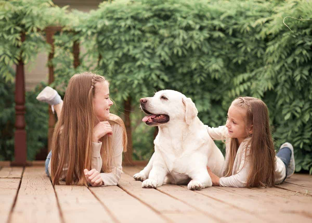 Female Labrador playing with kids