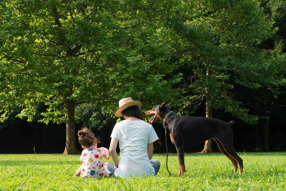 Doberman and its family sit on the lawn