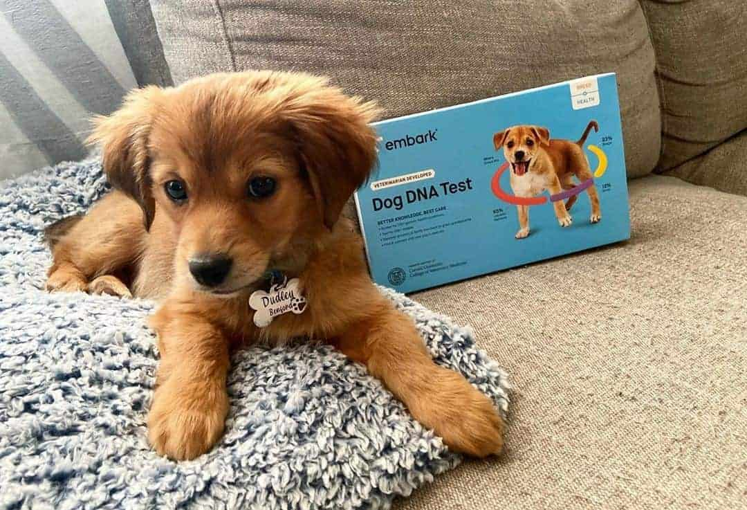 Embark DNA Test Review