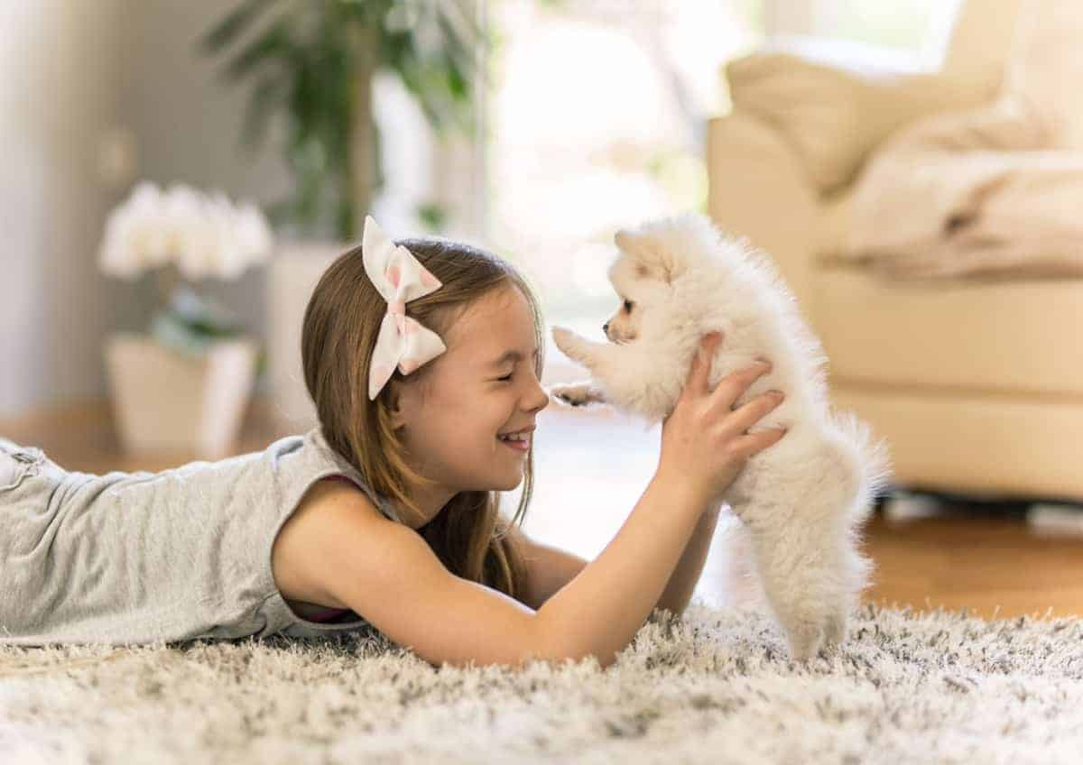 Girl playing with a white Pomeranian puppy