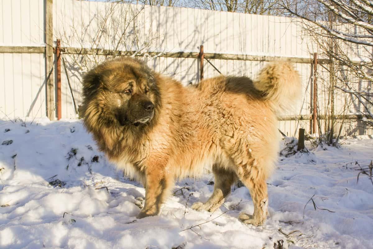 Russian Prison Dog in winter
