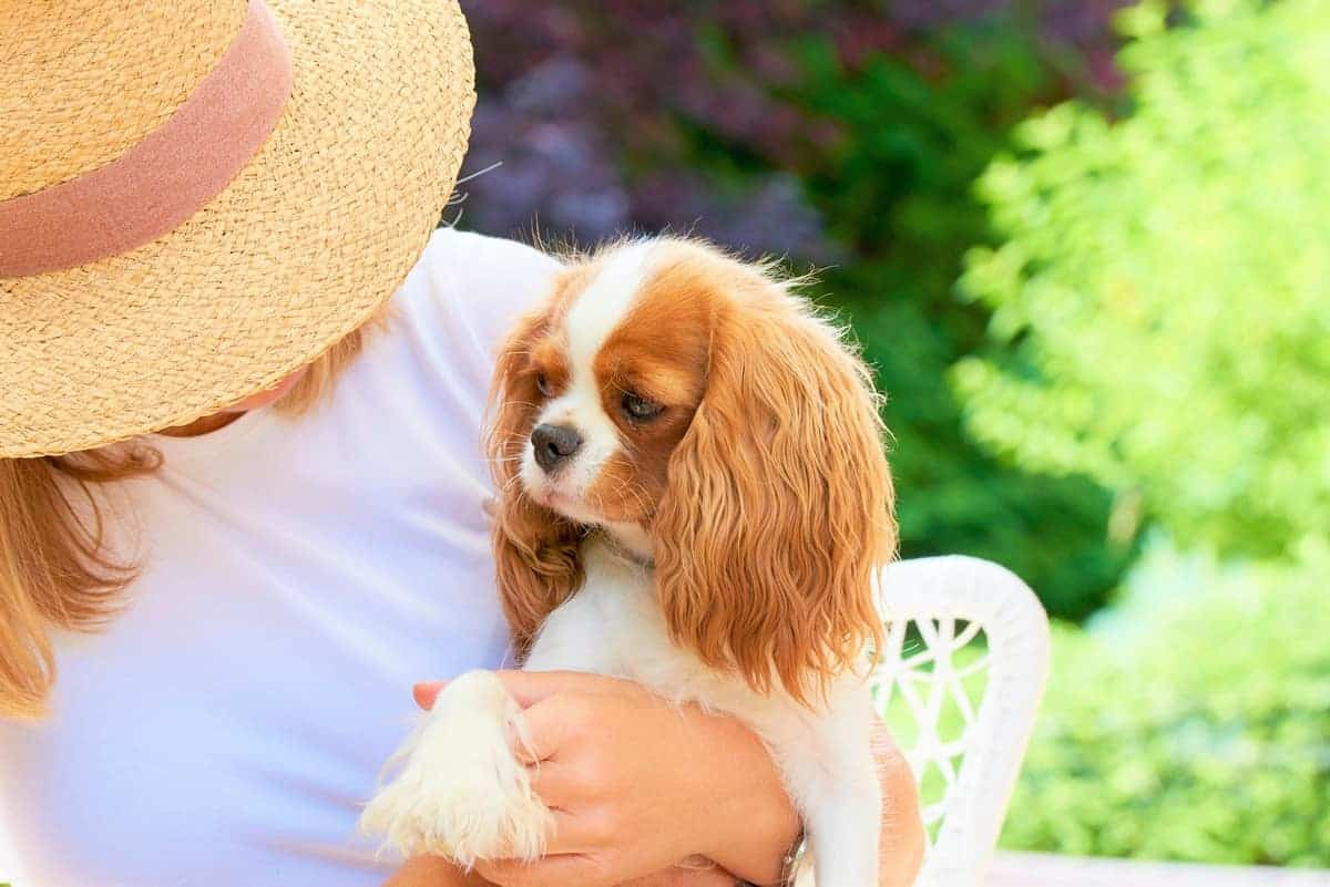 Woman with her cute teacup Cavalier King Charles Spaniel puppy