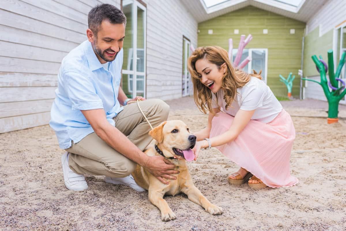 Smiling couple palming Labrador dog at Labrador rescue and shelter