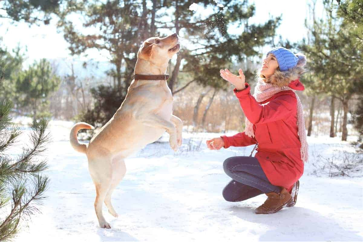 Woman playing with rescue Labrador in the snow