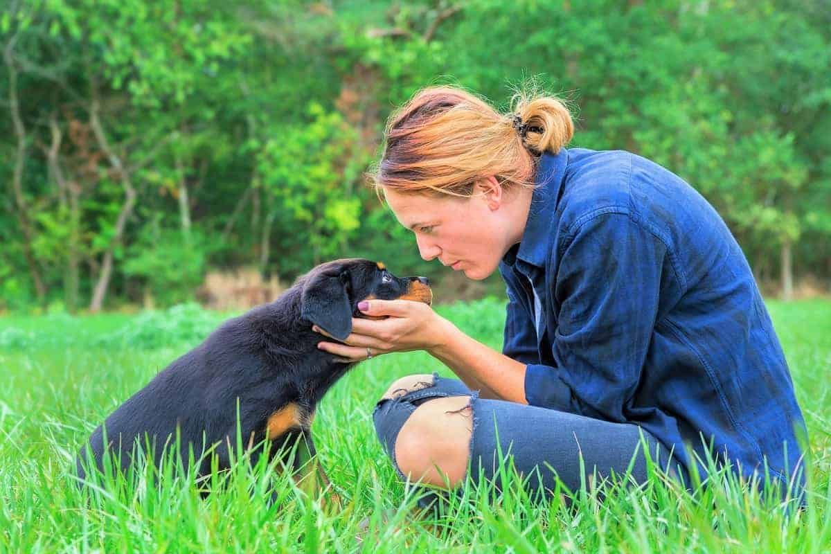 Best Rottweiler rescue for adoption