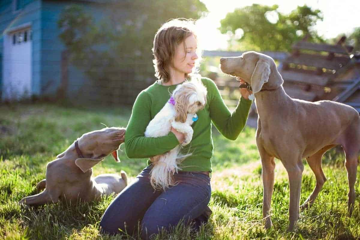 Male and female Weimaraner with a dog and their owner