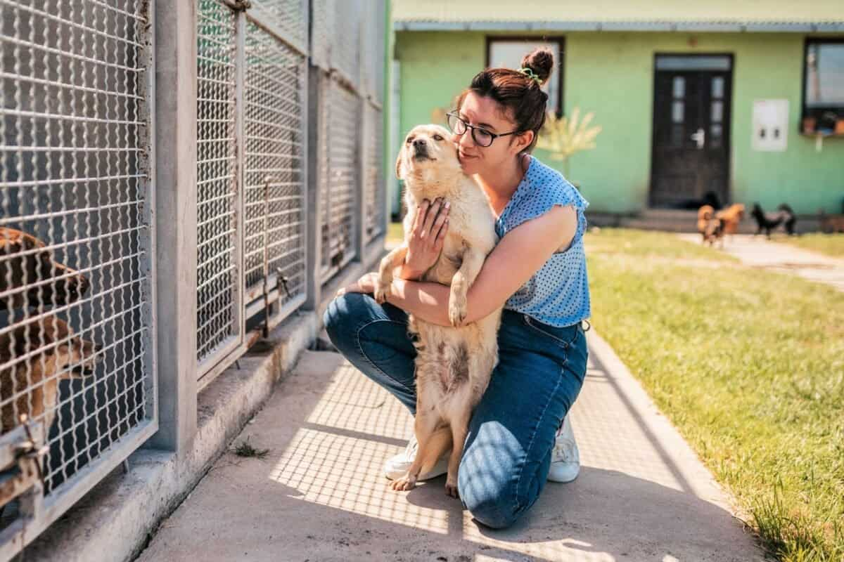 Woman playing with a rescue dog in a dog shelter