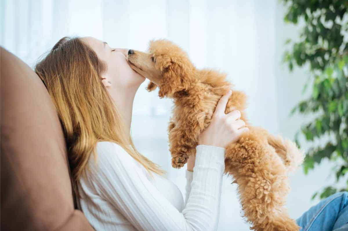 Puppy playing with a girl
