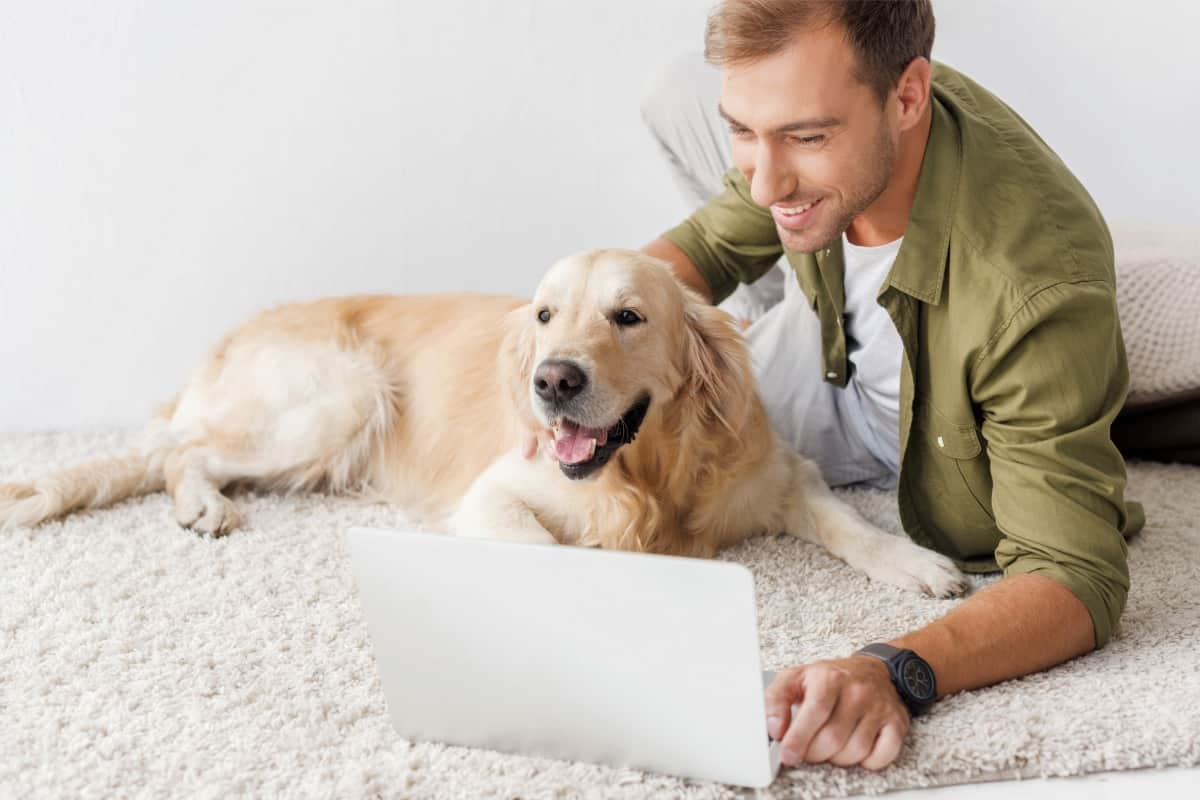 Purchasing Your Dog  How to Buy a Puppy Online Safely