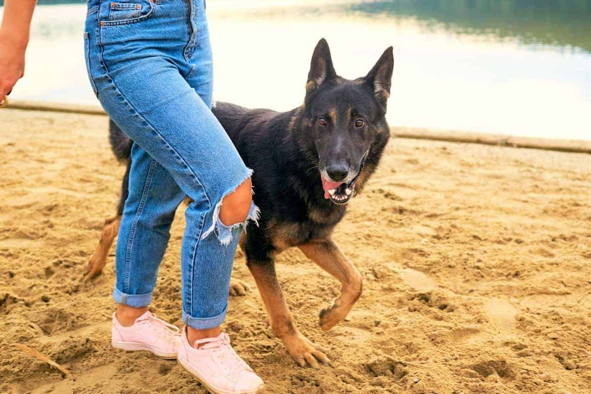 Woman walking with a German Shepherd rescue