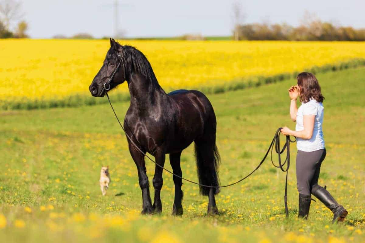 Woman with a Friesian horse and a dog