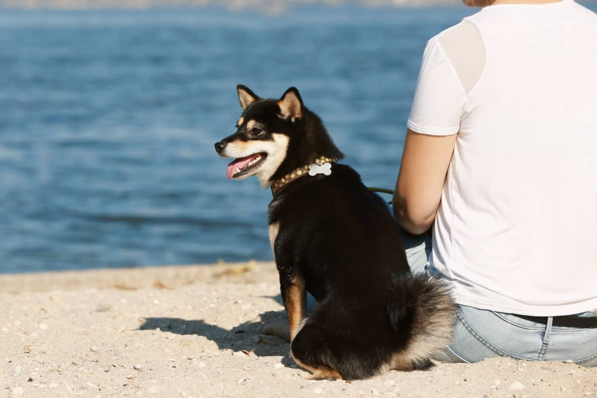 Woman with her adopted black Shiba Inu