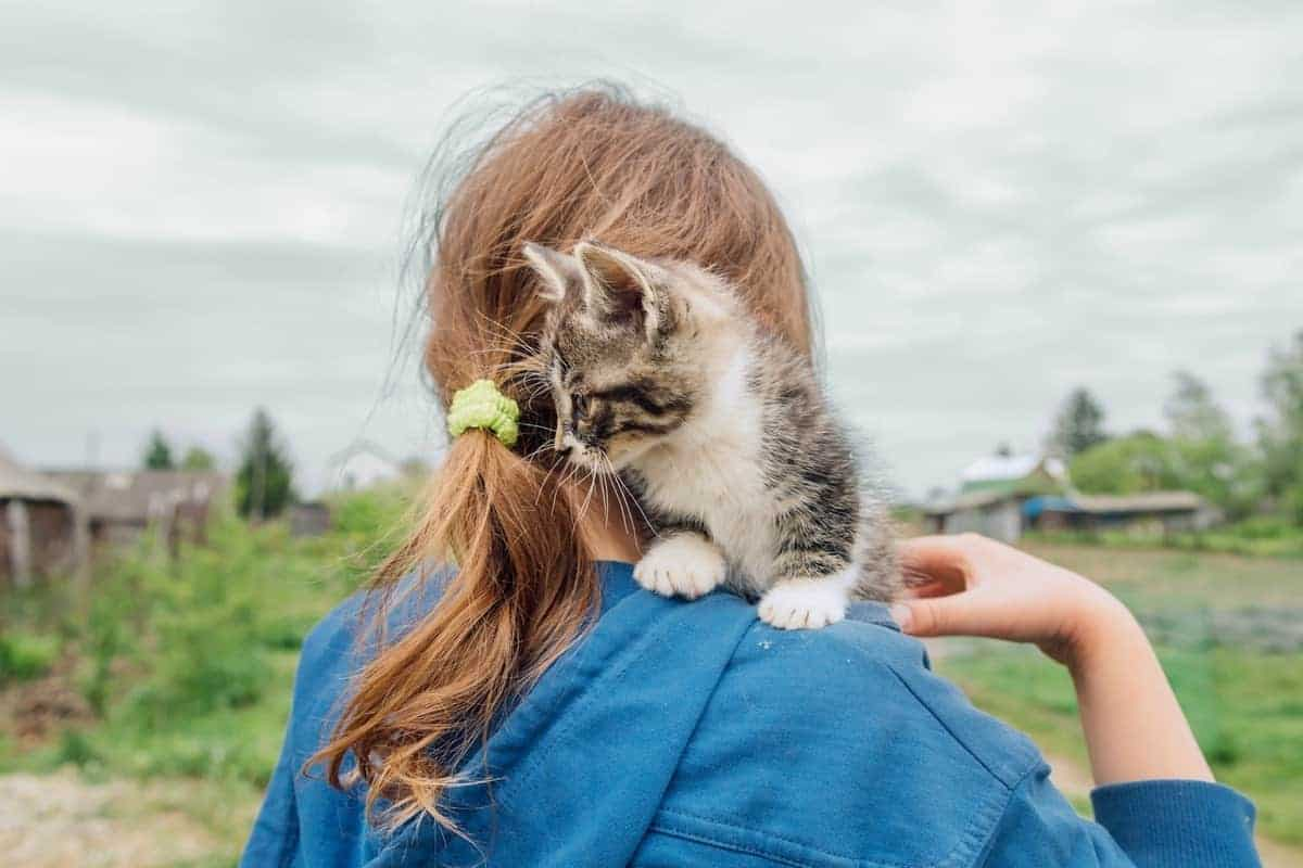 Girl and a kitten adopted for free