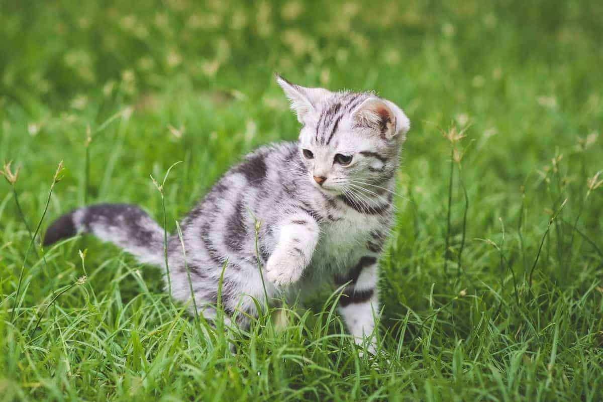 Ways to Find Free Kittens in Your Area for Adoption